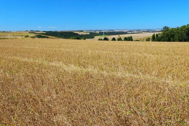 plantacao Mudança climática ameaça produtividade da soja