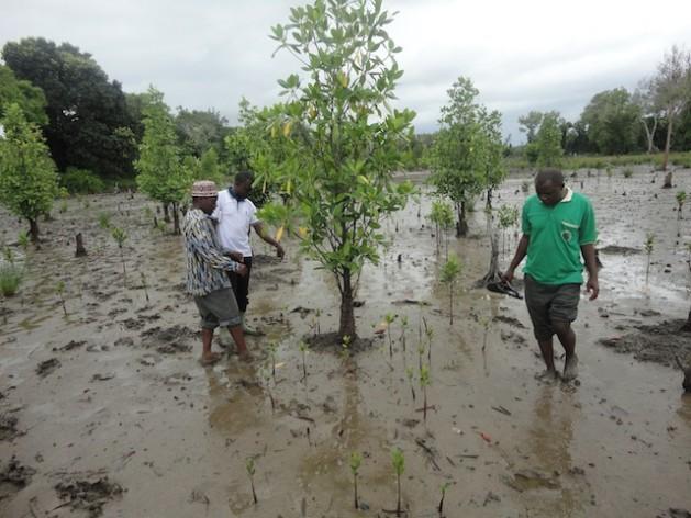 1018 Tanzania640 Guerra entre vacas, ovelhas e cultivos na Tanzânia