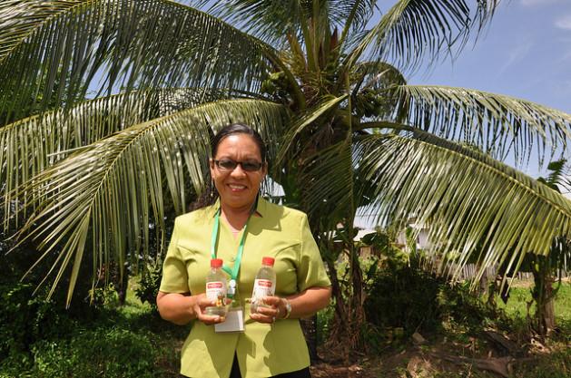 coco640 Mudança climática é boa para os cocos