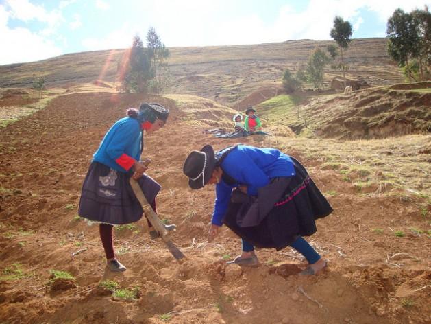 agricultura Impulso à pequena agricultura orgânica no Peru