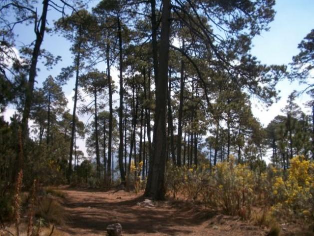 bosque1 As leis climáticas mexicanas se esquecem das mulheres