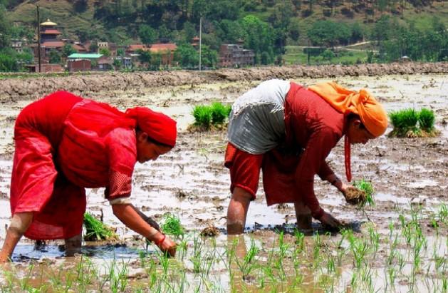 mulheres O CO2 tira nutrientes dos alimentos básicos