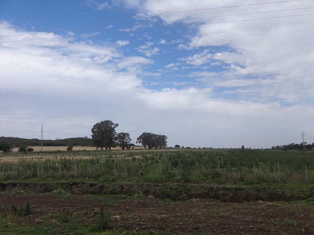 Terra desmatada para o cultivo da soja transgênica em uma área rural na província de Córdoba, centro da Argentina. Foto: Fabiana Frayssinet/IPS