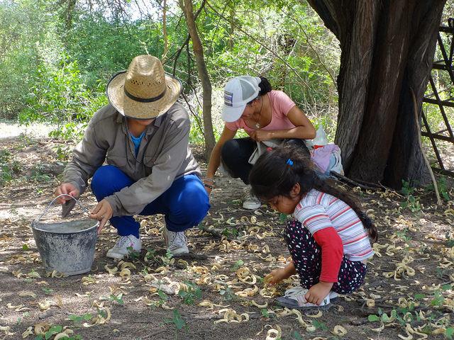 Três gerações de mulheres rurais coletam vagens de alfabrroba no povoado de San Gerónimo, na província de Santiago del Estero, na Argentina. As camponesas latino-americanas produzem metade dos alimentos da região. Foto: Fabiana Frayssinet/IPS