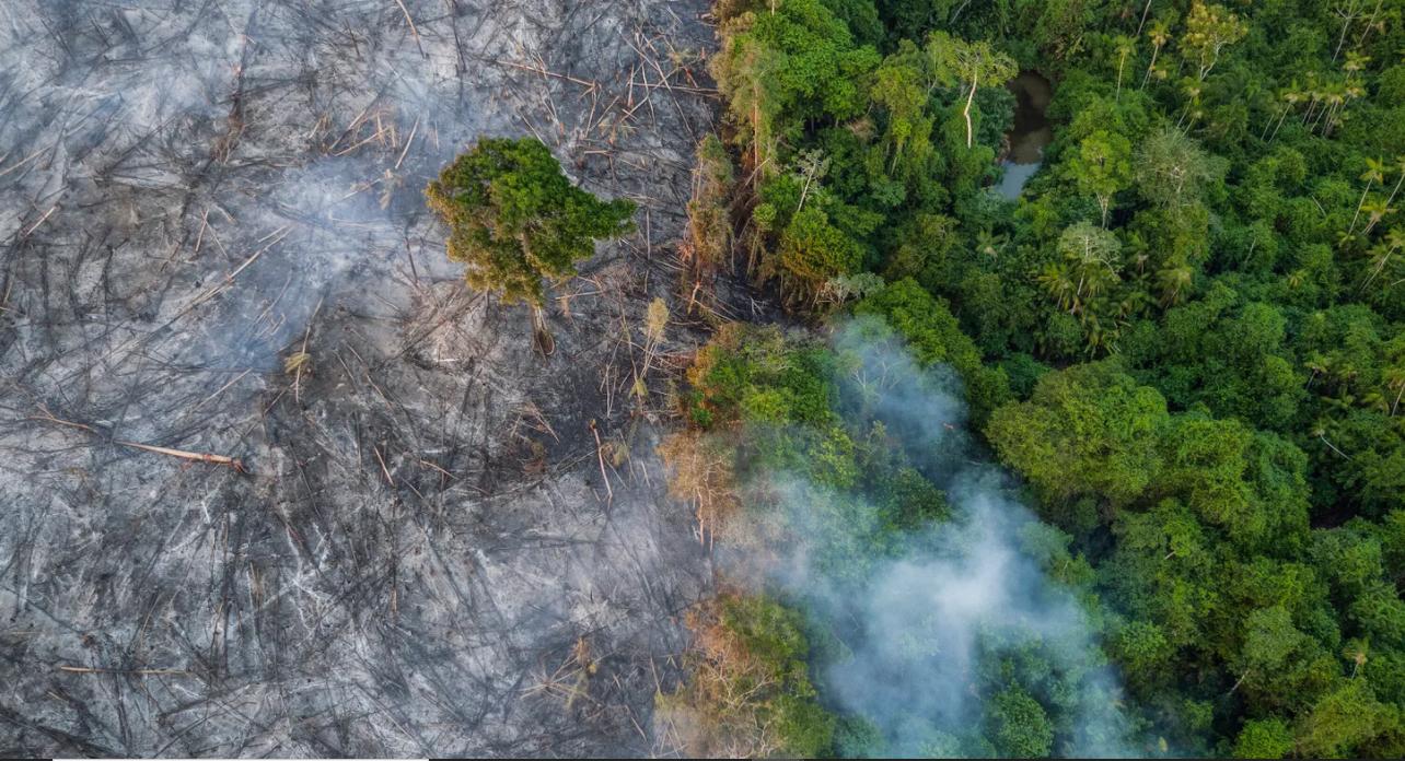 Estudo revela que a desmatamento da Floresta Amazônica é uma preocupação mundial