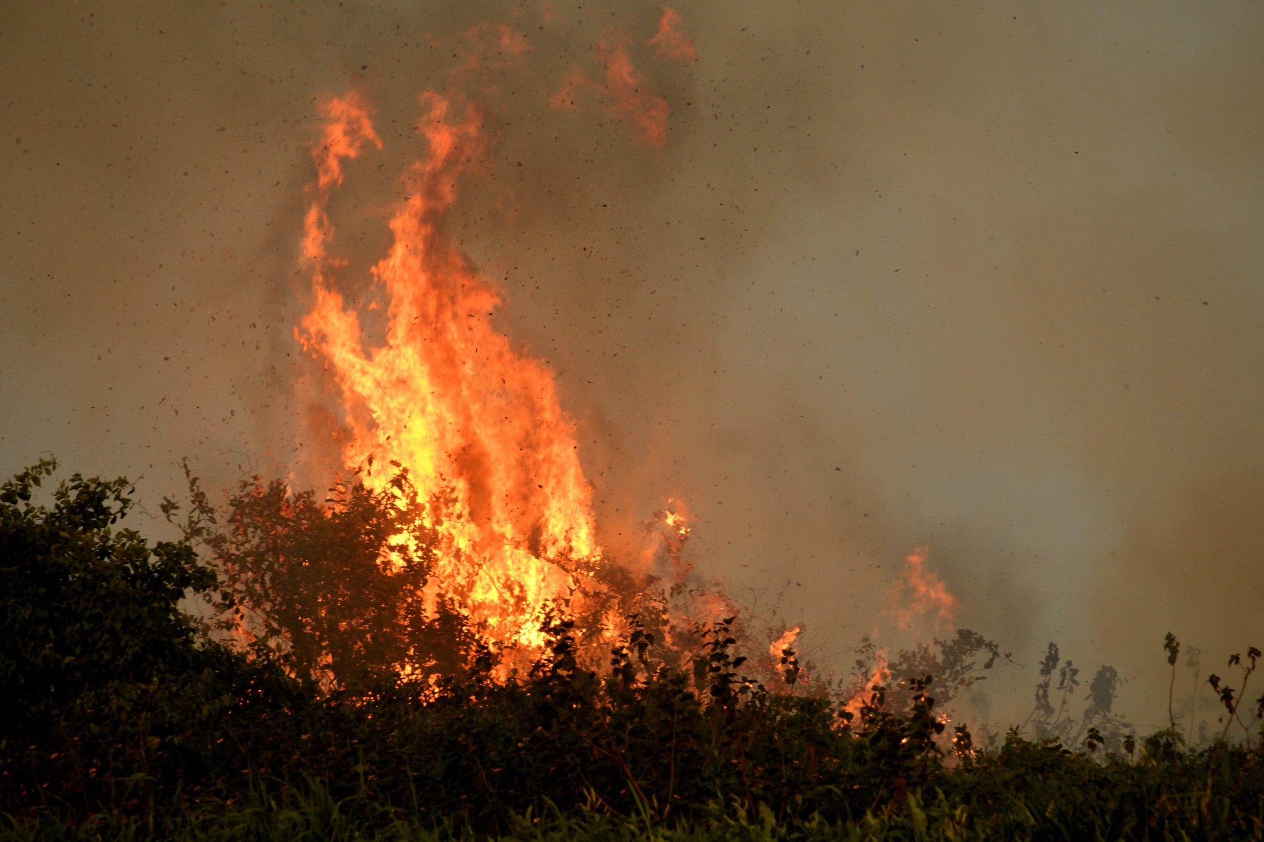 Organizações alertam para alto risco de incêndios no Pantanal