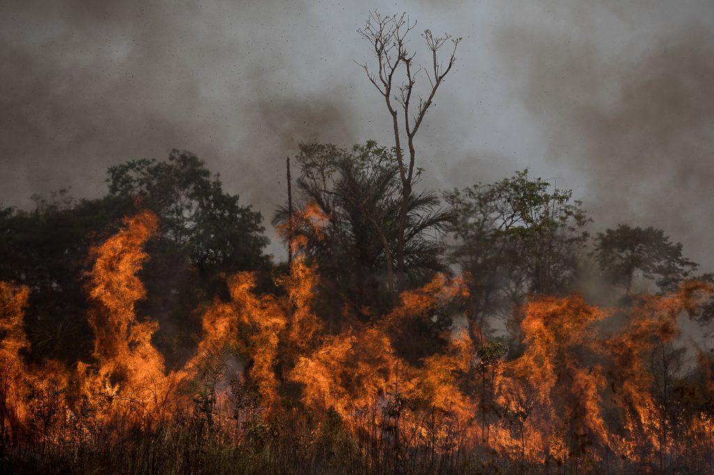 Fogo floresta