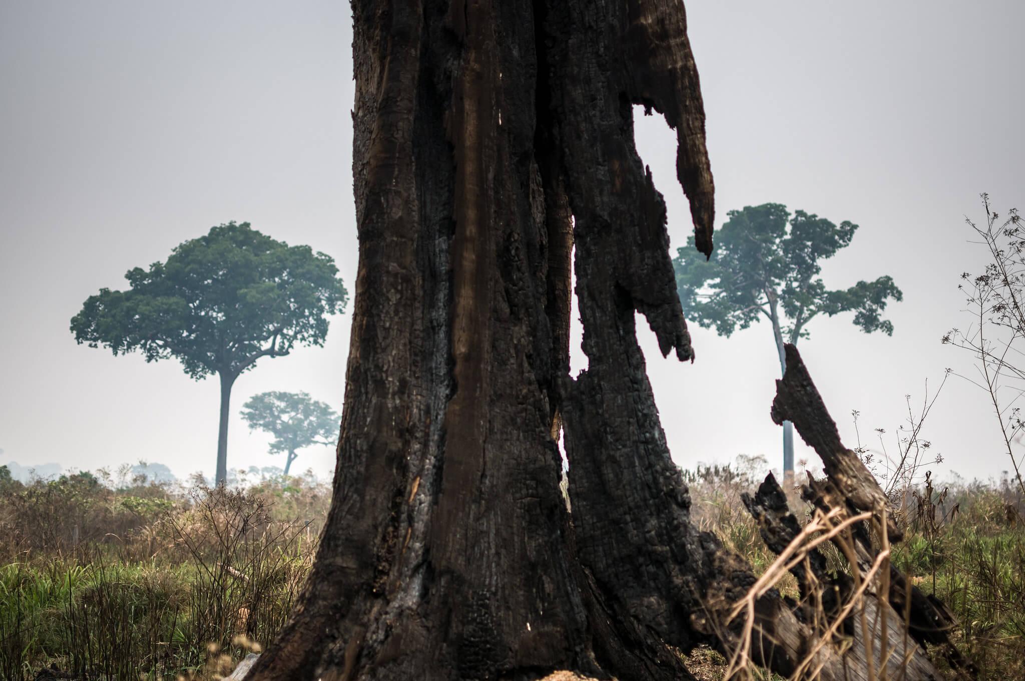IPAM lança concurso de fotografia Amazoniar