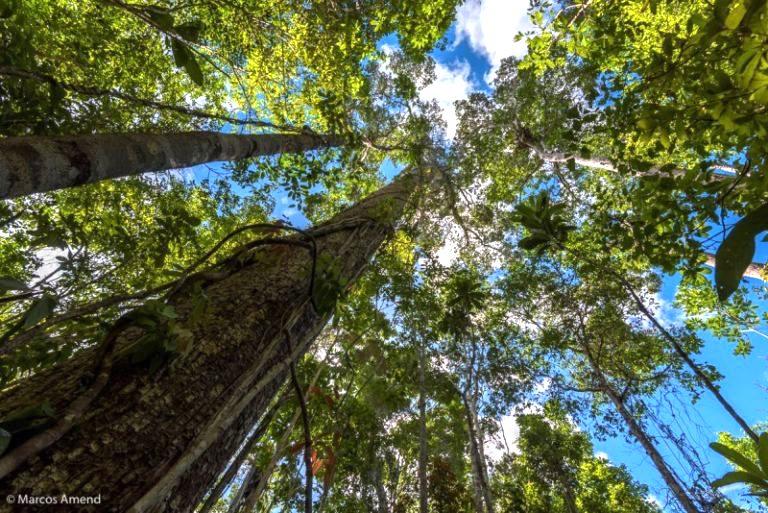 A restauração florestal e seus efeitos na biodiversidade da Mata Atlântica