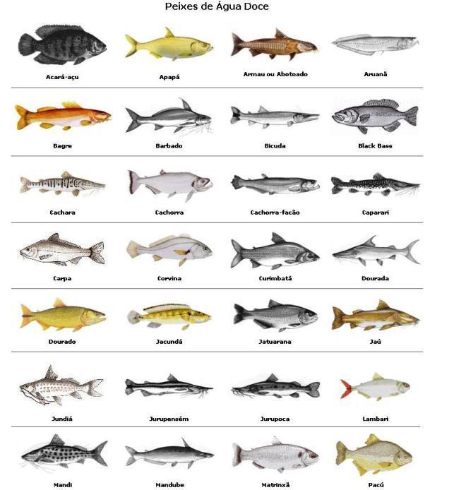 Suficiente Mapeamento de espécies dos rios brasileiros - Envolverde - Revista  DI15