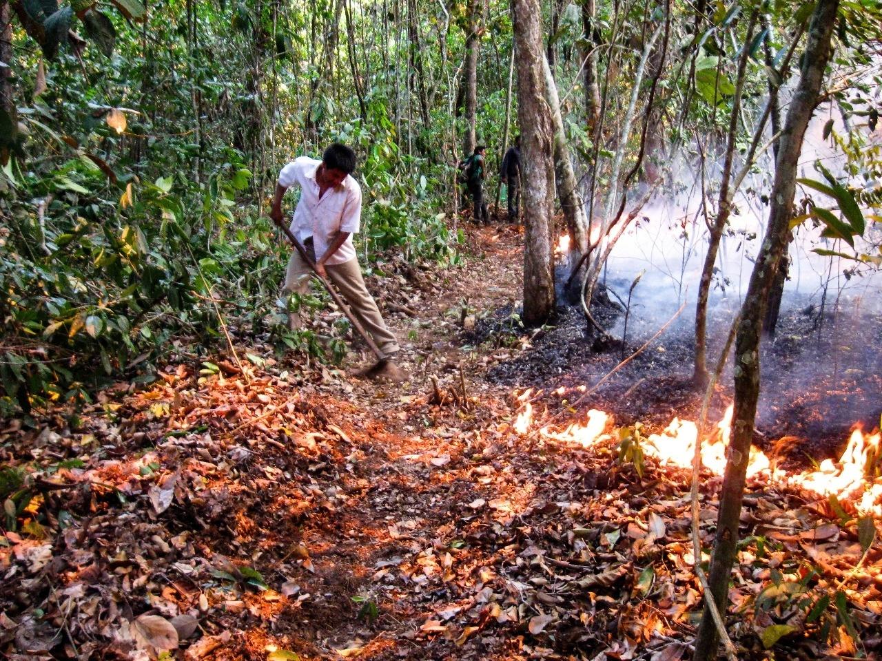 Com Amazônia mais seca, indígenas adaptam técnicas ancestrais de plantio